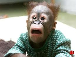 Monkey Shocked