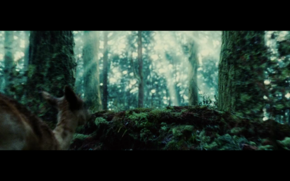 Twilight - 25