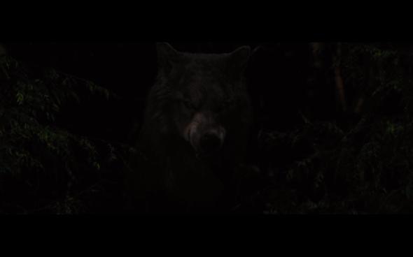 The Twilight Saga Breaking Dawn Part 1 - 1103