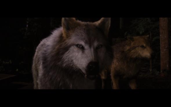 The Twilight Saga Breaking Dawn Part 1 - 1212