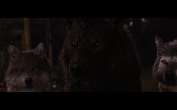 The Twilight Saga Breaking Dawn Part 1 - 1239