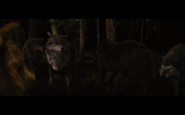 The Twilight Saga Breaking Dawn Part 1 - 1242