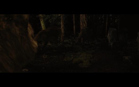 The Twilight Saga Breaking Dawn Part 1 - 1243