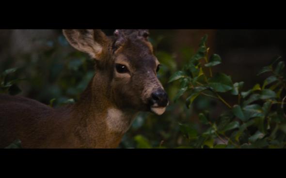 The Twilight Saga Breaking Dawn Part 2 - 135